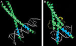 Introduction to Protein�DNA Interactions figure:4 thumbnail image
