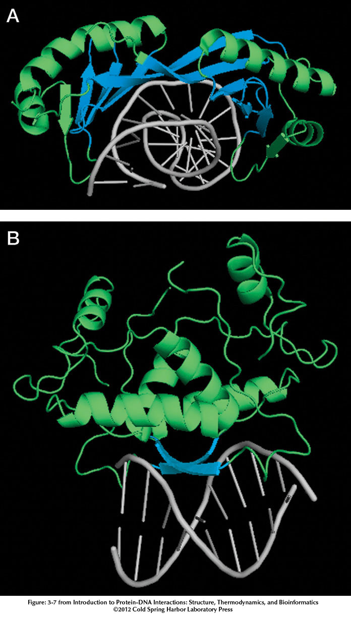 Introduction to Protein�DNA Interactions figure:4 image