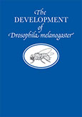 The Development of Drosophila melanogaster