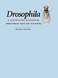 Drosophila: A Laboratory Handbook, Second Edition
